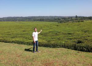 ケリチョの紅茶畑